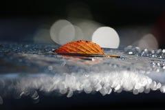 Άδεια φθινοπώρου που βρίσκεται στο επίκεντρο στους βράχους Στοκ Εικόνες
