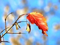 Άδεια 2016 φθινοπώρου του Τορόντου Στοκ εικόνα με δικαίωμα ελεύθερης χρήσης