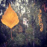 Άδεια φθινοπώρου στοκ φωτογραφία με δικαίωμα ελεύθερης χρήσης