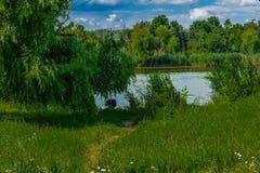 Άλλη φύση Στοκ φωτογραφίες με δικαίωμα ελεύθερης χρήσης