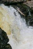 Άλμα ποταμών σολομών στοκ εικόνα