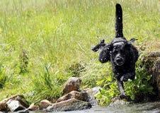 άλμα σκυλιών Στοκ Εικόνες