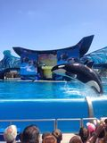 Άλμα Orca στοκ εικόνα
