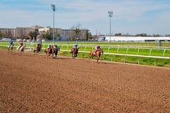 Άλογα αγώνων Στοκ εικόνες με δικαίωμα ελεύθερης χρήσης