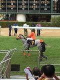 Άλογα αγώνων Στοκ Εικόνες
