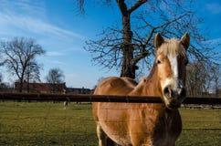 Άλογα αλόγων Στοκ φωτογραφία με δικαίωμα ελεύθερης χρήσης