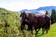 Άλογα βουνών Στοκ εικόνα με δικαίωμα ελεύθερης χρήσης