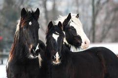 Άλογα γανωτών Στοκ φωτογραφίες με δικαίωμα ελεύθερης χρήσης
