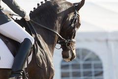 Άλογα εκπαίδευσης αλόγου σε περιστροφές Στοκ φωτογραφία με δικαίωμα ελεύθερης χρήσης