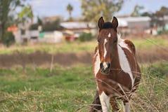 Άλογα ελεύθερα σε έναν τομέα στην Αργεντινή Στοκ φωτογραφίες με δικαίωμα ελεύθερης χρήσης