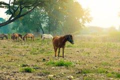 Άλογα και κοπάδι που τρώνε τη χλόη με τη φωτογραφία που φιλτράρεται Στοκ εικόνα με δικαίωμα ελεύθερης χρήσης