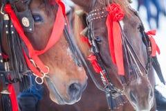 Άλογα και κόκκινες κορδέλλες Στοκ Φωτογραφίες