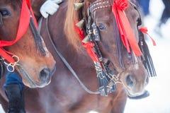 Άλογα και κόκκινες κορδέλλες Στοκ Εικόνα
