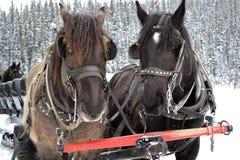 Άλογα και μεταφορές Στοκ εικόνα με δικαίωμα ελεύθερης χρήσης
