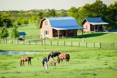 Άλογα και Bluebonnets στοκ φωτογραφία με δικαίωμα ελεύθερης χρήσης