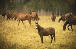Άλογα κοντά στο δάσος Στοκ εικόνα με δικαίωμα ελεύθερης χρήσης