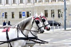 Άλογα ομάδας Στοκ Φωτογραφία