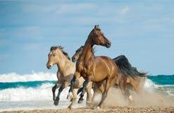 Άλογα που οργανώνονται σε άγρια περιοχές στοκ φωτογραφίες με δικαίωμα ελεύθερης χρήσης