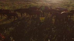 Άλογα που περπατούν στο λιβάδι φιλμ μικρού μήκους