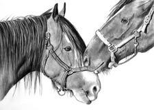 Άλογα που σπρώχνουν με τη μουσούδα, σχέδιο ρεαλισμού μολυβιών Στοκ εικόνα με δικαίωμα ελεύθερης χρήσης