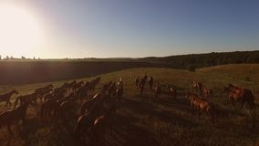 Άλογα που τρέχουν σε σε αργή κίνηση απόθεμα βίντεο