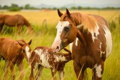 άλογα που χρωματίζονται Στοκ Φωτογραφία