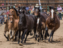 Άλογα ροντέο στοκ εικόνα με δικαίωμα ελεύθερης χρήσης