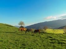 Άλογα σε ένα λιβάδι στα βουνά Στοκ Φωτογραφία