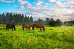 Άλογα σε ένα λιβάδι Στοκ εικόνα με δικαίωμα ελεύθερης χρήσης