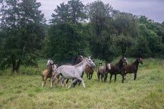 Άλογα σε ένα πεδίο Στοκ φωτογραφία με δικαίωμα ελεύθερης χρήσης