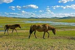 άλογα σε WulanBu όλο το αρχαίο πεδίο μάχη λιβαδιών Στοκ εικόνες με δικαίωμα ελεύθερης χρήσης