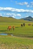άλογα σε WulanBu όλο το αρχαίο πεδίο μάχη λιβαδιών Στοκ Φωτογραφίες