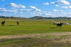 άλογα σε WulanBu όλο το αρχαίο πεδίο μάχη λιβαδιών Στοκ Εικόνες