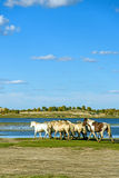 άλογα σε WulanBu όλο το αρχαίο πεδίο μάχη λιβαδιών Στοκ φωτογραφία με δικαίωμα ελεύθερης χρήσης