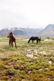 Άλογα στα βουνά Στοκ Εικόνα