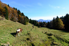 Άλογα στα λιβάδια βουνών στην εποχή του φθινοπώρου Στοκ φωτογραφία με δικαίωμα ελεύθερης χρήσης
