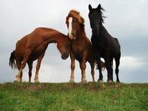 Άλογα στην ακτή στοκ φωτογραφία