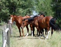 Άλογα στην επαρχία Στοκ φωτογραφίες με δικαίωμα ελεύθερης χρήσης