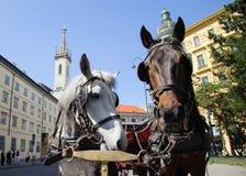 Άλογα στη Βιέννη Στοκ φωτογραφία με δικαίωμα ελεύθερης χρήσης