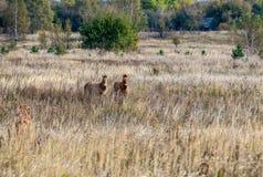 Άλογα στη ζώνη του Τσέρνομπιλ Στοκ εικόνες με δικαίωμα ελεύθερης χρήσης