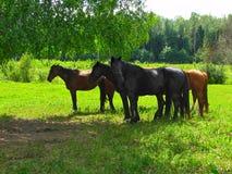 Άλογα στη σκιά Στοκ φωτογραφίες με δικαίωμα ελεύθερης χρήσης