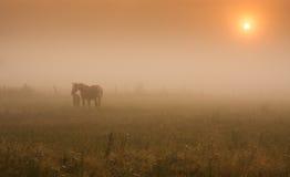 Άλογα στη στιλβωτική ουσία Å» uÅ 'awy στοκ εικόνα με δικαίωμα ελεύθερης χρήσης