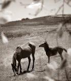 Άλογα στη φύση Στοκ φωτογραφία με δικαίωμα ελεύθερης χρήσης