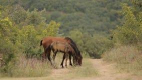 Άλογα στις άγρια περιοχές απόθεμα βίντεο