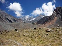 Άλογα στις αργεντινές Άνδεις στοκ φωτογραφίες
