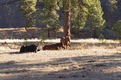 Άλογα στον ήλιο ξημερωμάτων Στοκ εικόνα με δικαίωμα ελεύθερης χρήσης