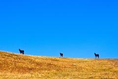 Άλογα στον ορίζοντα Στοκ φωτογραφία με δικαίωμα ελεύθερης χρήσης