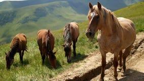Άλογα στον πράσινο θερινό τομέα λιβαδιών απόθεμα βίντεο
