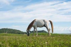 Άλογα στον τομέα στο φράγμα Krasiao Στοκ φωτογραφία με δικαίωμα ελεύθερης χρήσης