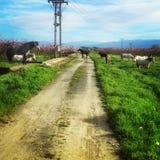 Άλογα στον τομέα στοκ φωτογραφίες με δικαίωμα ελεύθερης χρήσης